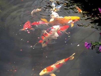 Vand- og fiskeplejemidler
