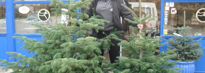 Køb et juletræ til 175 kr.